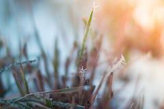 Helada de la mañana en las plantas con el fondo borroso Fotos de archivo libres de regalías