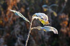 Helada de noviembre en las hojas Imagen de archivo libre de regalías