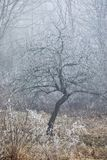 Helada del árbol del invierno Imagen de archivo libre de regalías