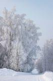 Helada del invierno Imágenes de archivo libres de regalías