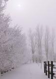 Helada del invierno Fotografía de archivo