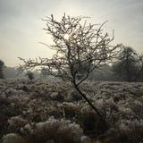 Helada del invierno Fotografía de archivo libre de regalías