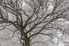 Helada del invierno Imagenes de archivo