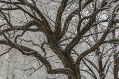 Helada del invierno Fotos de archivo