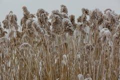 Helada del invierno Foto de archivo libre de regalías