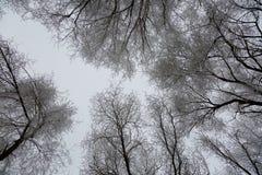 Helada del invierno Imagen de archivo libre de regalías