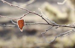 Helada del otoño Imagenes de archivo