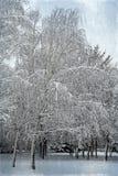 Helada del paisaje del invierno en los árboles y la nieve de abedul que caen en la ciudad p Fotos de archivo