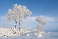 Helada en árboles Foto de archivo libre de regalías
