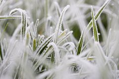 Helada en hierba Imagen de archivo libre de regalías