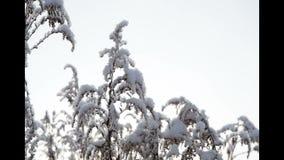 helada en hierba seca metrajes