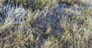 Helada en la hierba almacen de video