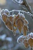 Helada en las hojas de la caída Imagenes de archivo