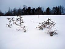 Helada hermosa del bosque Imagen de archivo libre de regalías