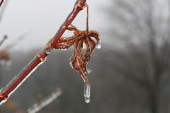 Helada temprano del invierno en la hoja   Foto de archivo libre de regalías