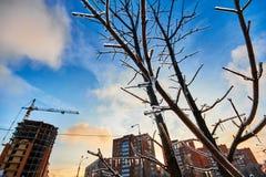Helado sobre árboles en el fondo de una ciudad del invierno imagen de archivo libre de regalías