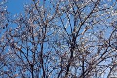 Helado sobre ramas de roble Fotografía de archivo libre de regalías