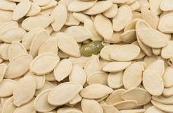 Helathy pumkin snack. Healthy pumpkin seed make for a good snack Royalty Free Stock Photo