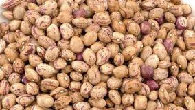 Helathy Vegetable Raw Kidney Bean
