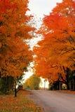 Helder Autumn Colored Trees aan Kant van Weg Royalty-vrije Stock Foto