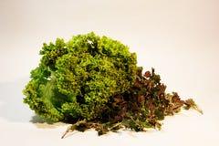 Helder beeld van greens, citroen, tomaten, komkommers, salade royalty-vrije stock fotografie