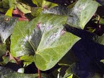 Helder blad met dauw stock foto's