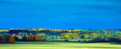 Helder de herfstbos lanscape Stock Foto's