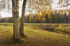 Helder de herfstlandschap Stock Afbeeldingen