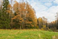 Helder de herfstlandschap Stock Foto's