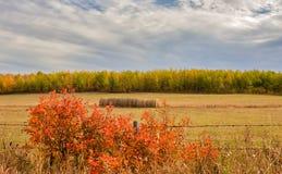 Helder en kleurrijk landbouwplattelandslandschap Royalty-vrije Stock Afbeelding