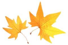 Helder-gekleurde de herfstbladeren Stock Fotografie