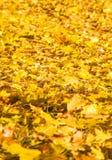 Helder gekleurde de herfstbladeren Royalty-vrije Stock Afbeelding