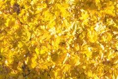 Helder gekleurde de herfstbladeren Royalty-vrije Stock Afbeeldingen