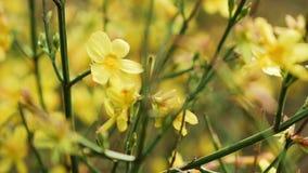 Helder Gekleurde gele bloemen in tuininstallaties stock footage