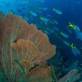Helder gekleurde tropische koraalachtergrond Misool, Raja Ampat, Indonesi? royalty-vrije stock afbeelding