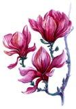 Helder geschilderde tak van magnoliabloemen op een witte achtergrond Royalty-vrije Stock Afbeeldingen