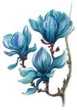 Helder geschilderde tak van magnoliabloemen op een witte achtergrond Stock Foto's