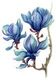 Helder geschilderde tak van magnoliabloemen op een witte achtergrond Stock Foto