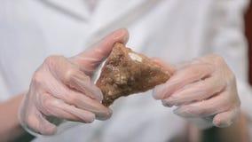 Helder grijs robijnrood kristalerts in handen met handschoenen De kristallisatie is het natuurlijke of kunstmatige proces waardoo royalty-vrije stock afbeelding
