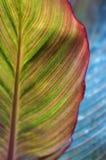Helder kleurrijk blad. Creatieve aard. Stock Afbeeldingen
