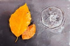 Helder kleurrijk de herfstblad die in water drijven stock fotografie