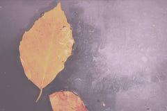 Helder kleurrijk de herfstblad die in water Uitstekende Retro Fil drijven stock foto's