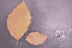 Helder kleurrijk de herfstblad die in water Uitstekende Retro Fil drijven stock fotografie