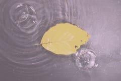 Helder kleurrijk de herfstblad die in water Uitstekende Retro Fil drijven royalty-vrije stock foto
