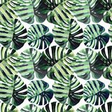 Helder mooi groen kruiden tropisch prachtig bloemen de zomerpatroon van Hawaï van een tropische palmbladenwaterverf vector illustratie