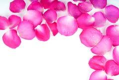 Helder nam bloemblaadjes toe Royalty-vrije Stock Afbeelding