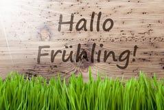 Helder Sunny Wooden Background, Gras, de Lente van de Middelenhello van Hallo Fruehling Stock Afbeeldingen