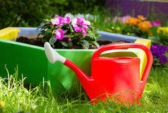 Helder tuinmeer in het Park Stock Fotografie