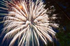 Helder vuurwerk tegen de donkerblauwe hemel en de bomen Stock Afbeelding