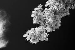 Helder wit van regenboom in de donkere hemel Royalty-vrije Stock Foto